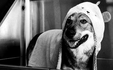 První psí barber salon: Přímo pohádková péče