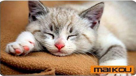Podložka pod myš s koťátkem