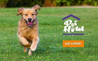 Den v psí školce nebo noc v psím hotelu Pet Center v Praze