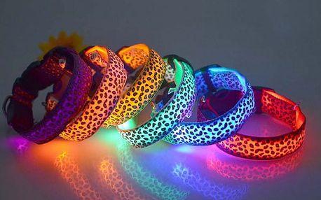 Svíticí obojek s leopardím vzorem