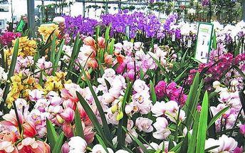 Výstava orchidejí v Drážďanech, nákupy v Primarku