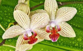 Celodenní zájezd na výstavu orchidejí do Drážďan s prohlídkou města pro 1