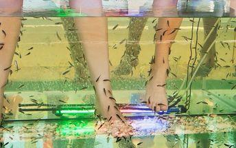 30-60minutová relaxace pomocí rybiček Garra Rufa