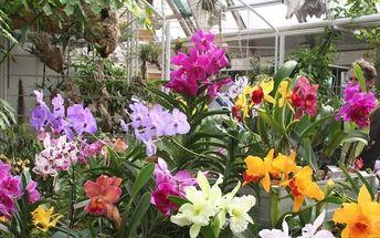Kamélie v Pillnitz a výstava orchidejí: vlakem