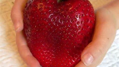 Semena obřích jahod - 100 semen