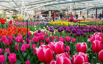 Květinové korzo, sýry a Amsterdam na 1 noc