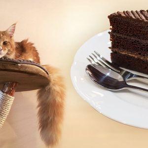 V prima partě: káva a dezert v kočičí kavárně