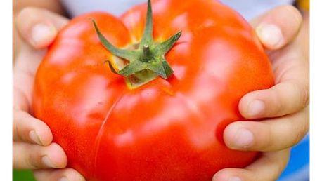 Semena obřích rajčat - 200 semen