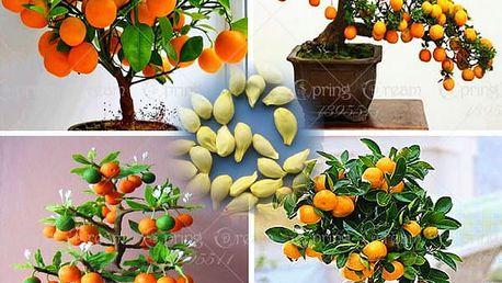 Citrusové bonsaje - 50 ks semen