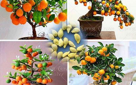 Citrusové bonsaje - 40 ks semen
