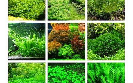 Semena akvarijních rostlin, které se snadno pěstují - až 1000 kusů