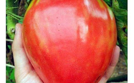 Semena velkých rajčat - 100 kusů