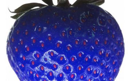 Semena modré jahody - 100 ks