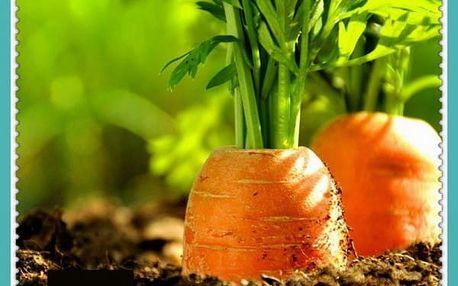 Semena oranžové mrkve - 400 kusů
