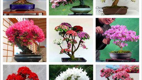 Semena japonské třešně (sakura) ve stylu bonsai - 10 ks
