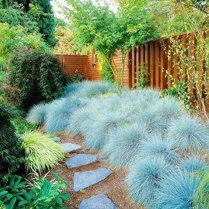 Rostliny, které zkrášlí vaši zahradu i interiér