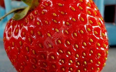 Semena lahodných obřích jahod - 300 ks