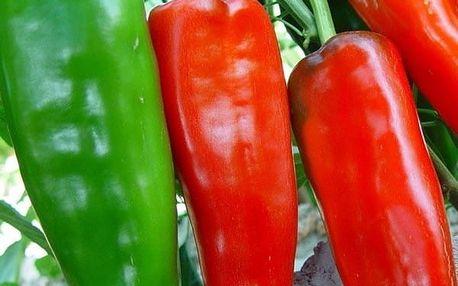 Gigantické papriky Marconi - 100 semínek
