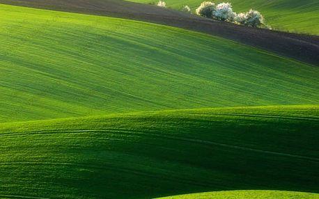 Okrasné travní osivo - 500 ks