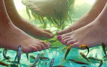 Koupel pro vaše nožky od rybek Garra Rufa
