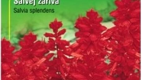 Šalvěj zářivá - 40 semen - dodání do 2 dnů