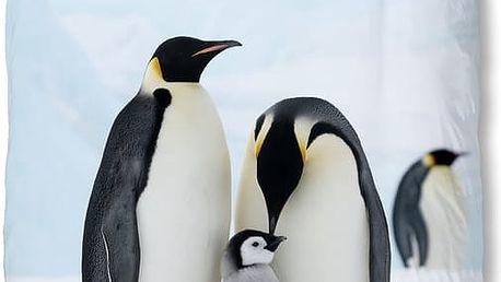Povlečení Muller Textiel Pinguins, 140 x 200 cm