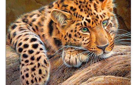 3D obraz levhartího mláděte