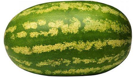Semena obřího melounu - 30 kusů