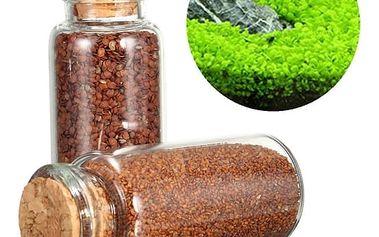 Semínka k vypěstování akvarijní dekorace