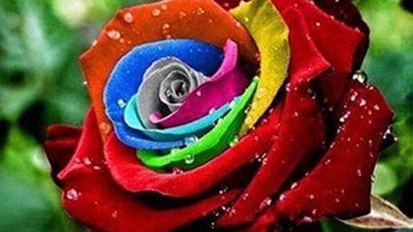 Semena duhové růže - 200 kusů