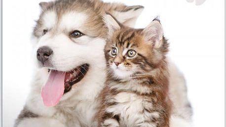 Nástěnný kalendář 2017 - Štěňátka a koťátka - dodání do 2 dnů