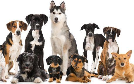 Fyzioterapie, rehabilitace a masáže psů