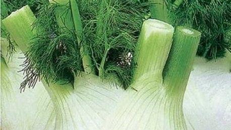 Semena fenyklu sladkého - 100 kusů