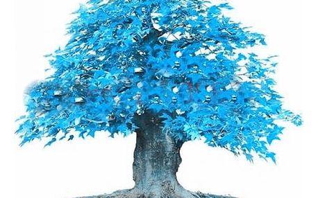 Semena japonské bonsaje s nebesky modrými listy - 20 kusů