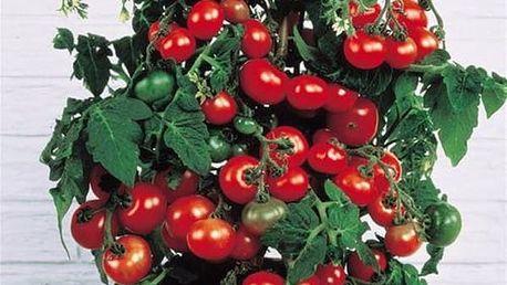 Cherry rajčata - 50 semen