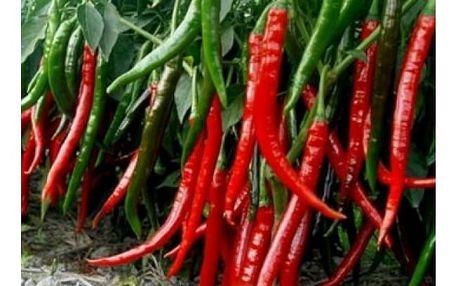 Semena obřích chilli papriček - 200 ks