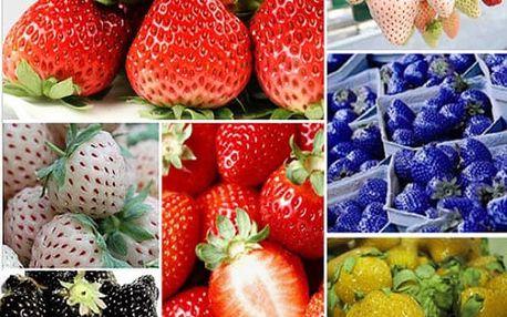 Jahody různých barev - 100 kusů semínek