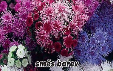 Nestařec Mexický - Směs barev - semena 0,2 g - dodání do 2 dnů