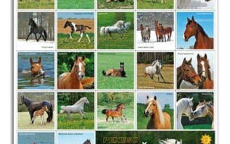 Pexeso - Koně - dodání do 2 dnů
