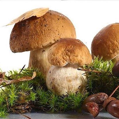 Pěstební mix osmi druhů lesních hub. Na houby už nemusíte chodit do lesa, vypěstujte si vlastní.