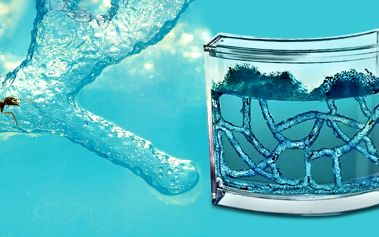 Antquarium - gelové mraveniště přímo u vás doma