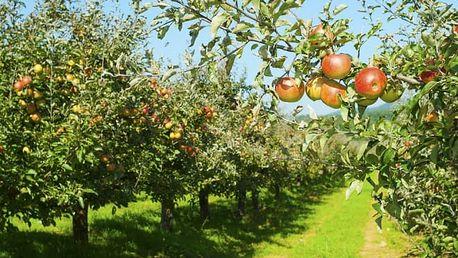 3 ks ovocných stromků: jabloně, hrušky a švestky, meruňky, broskve a třešně + možnost hnojiva