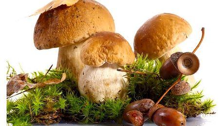Vypěstuj si houby doma na zahrádce