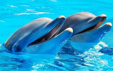 Sobotní výlet do ZOO s delfináriem a za památkami Norimberku pro JEDNOHO
