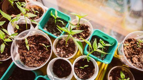 Semínka jahod, orchidejí, růží, chilli papriček či fazolí, možnost bez nebo s poštovným