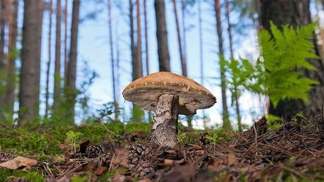 Zasaďte si houby! Jarní sadba hub - 8 druhů v balení. 1, 2 či 4 balení + poštovné zdarma