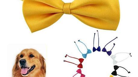 Ozdoba pro psy - mašle