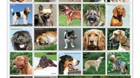 Pexeso - Pejskové - dodání do 2 dnů