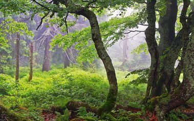 Klid a panenská příroda v chráněném území Rýchory