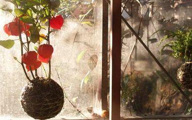 Krásně vyzdobený domov: kurz výroby Kokedamů